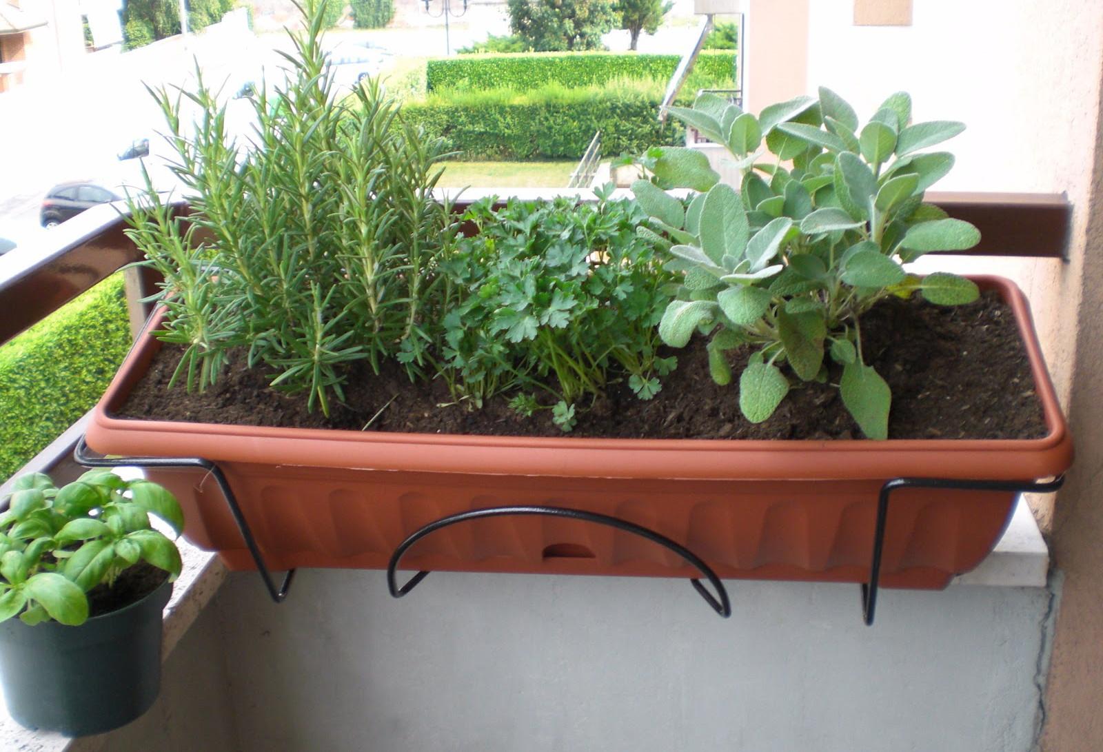 Mini Giardino Sul Balcone : Lancio di rifiuti dal condominio gettare terriccio mozziconi di