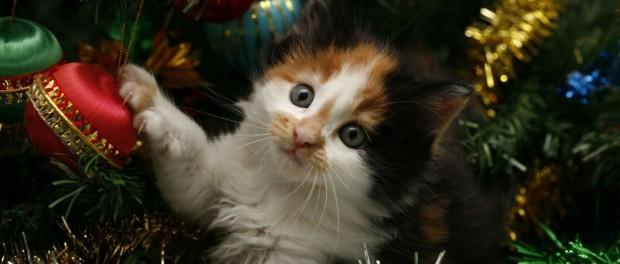 Come Realizzare Un Albero Di Natale Sicuro A Prova Di Gatto E