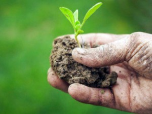 agricoltura-sostenibile