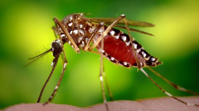 Chikungunya, aumentano i casi a Latina: 2 accertati e 2 probabili