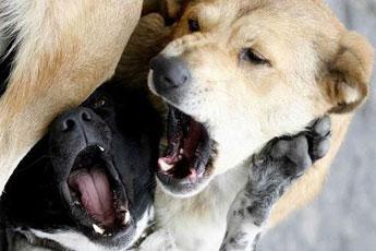 Video gratis scopate con cani - Scopate sul divano ...