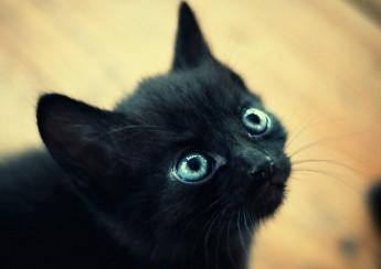 Parma Riscatto Per Un Gatto Nero